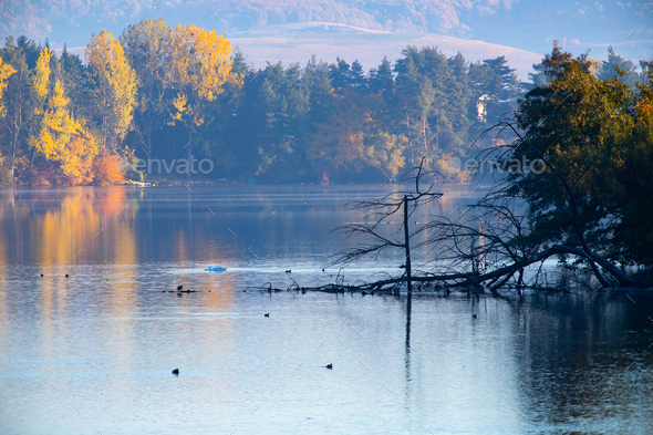 Golden autumn trees and lake. Autumn landscape, sunny morning. - Stock Photo - Images