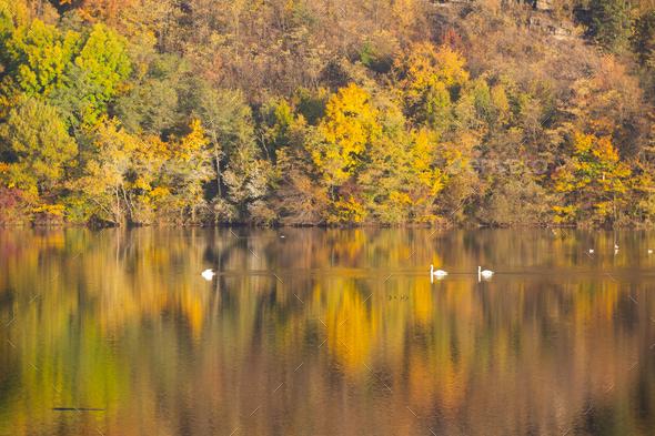 Golden autumn trees and lake. Autumn landscape, sunny morning. - Stock Photo - Images