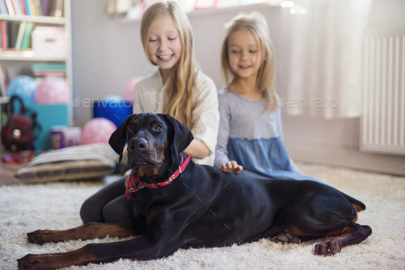 Four legged pet is their best friend - Stock Photo - Images