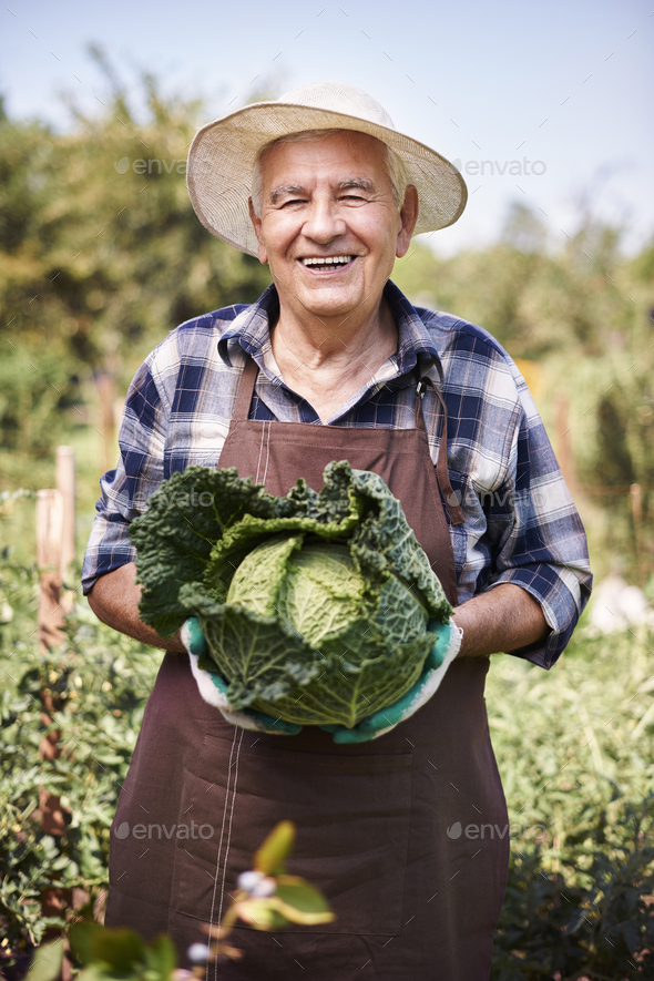 My organic vegetables are very healthy and tasty - Stock Photo - Images