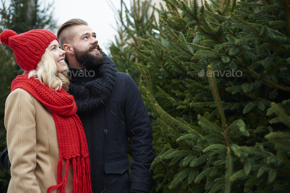 About to buy big christmas tree - Stock Photo - Images