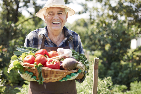 Fresh vegetables from my garden - Stock Photo - Images