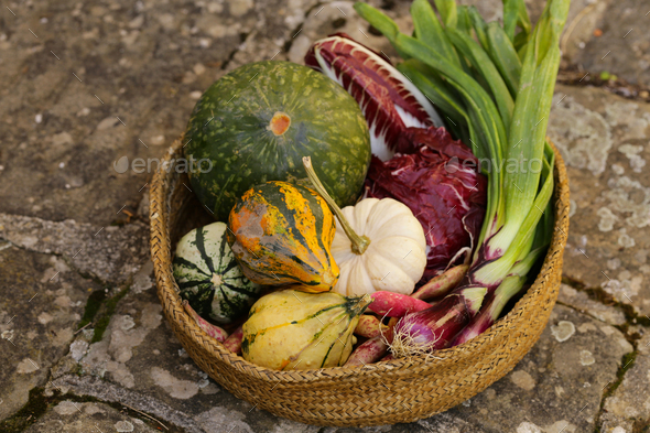 Autumn Vegetables Harvest - Stock Photo - Images