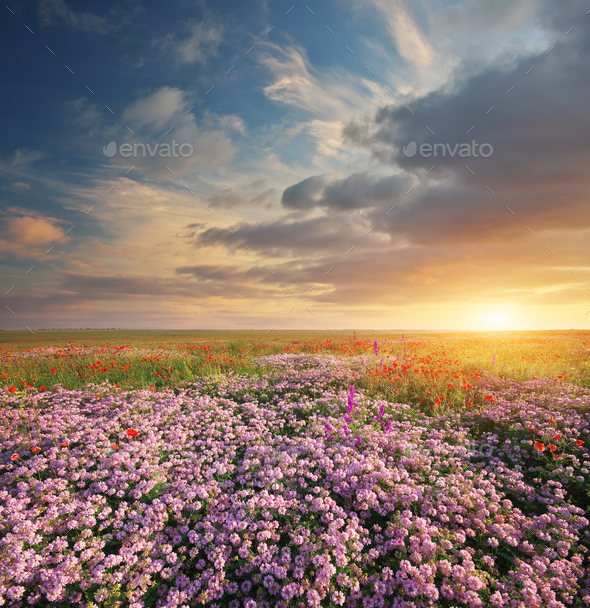 Spring flowers  in meadow. - Stock Photo - Images