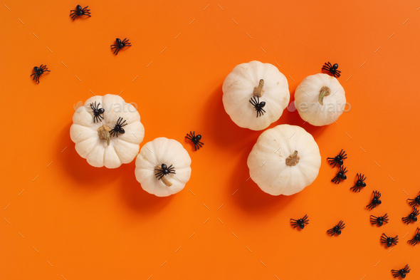 Halloween Pumpkins and Spiders - Stock Photo - Images