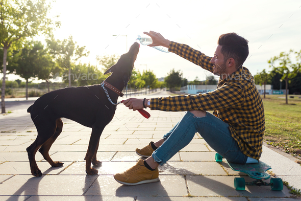 Dog drinking water from the plastic bottle in the park. - Stock Photo - Images