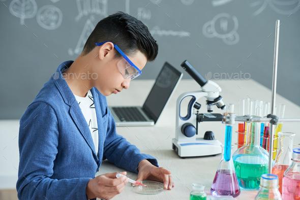 Adding reagent in petri dish - Stock Photo - Images