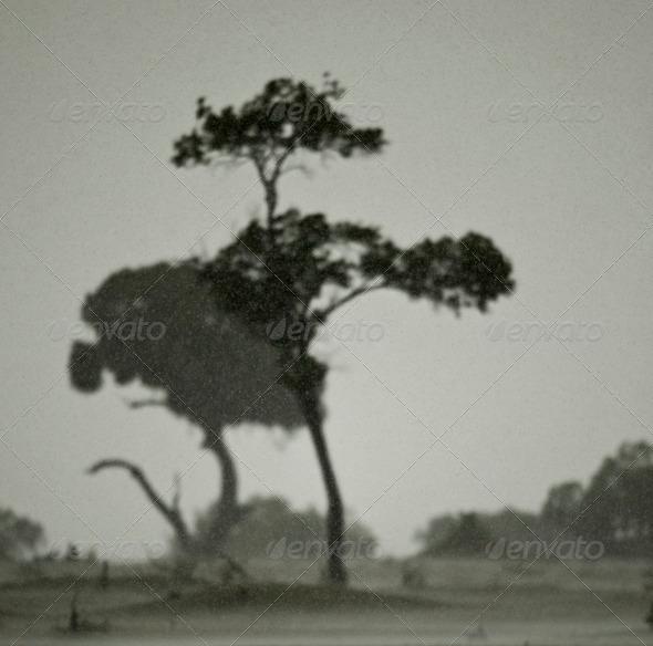African landscape in rain, Serengeti National Park, Serengeti, Tanzania - Stock Photo - Images