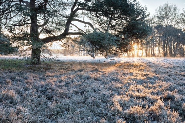 winter sunrise over frosted meadow and tree - Stock Photo - Images