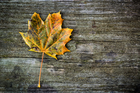 Single autumn leaf over wooden backgound - Stock Photo - Images