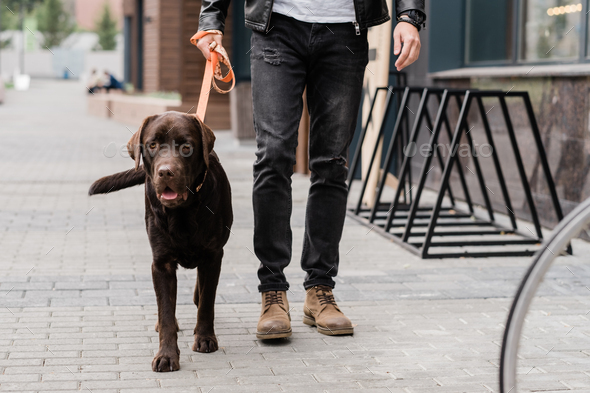 Cute brown purebred dog and his owner moving down street of the city - Stock Photo - Images