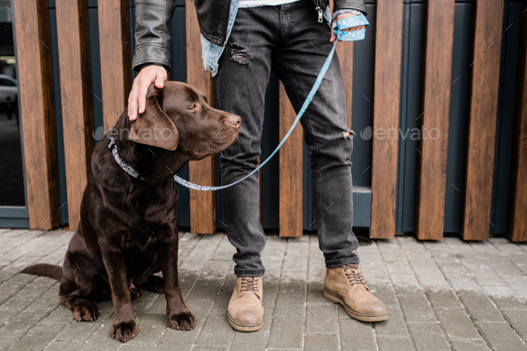 Young man in black jeans touching head og his cute brown pet during chill - Stock Photo - Images