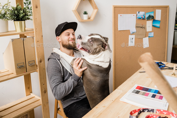 Happy young casual man sitting on chair by wooden table and playing with his pet - Stock Photo - Images