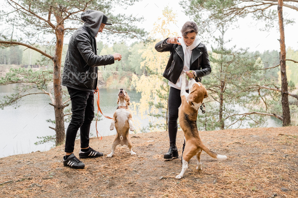 Happy young casual couple playing with two purebred beagles while enjoying chill - Stock Photo - Images