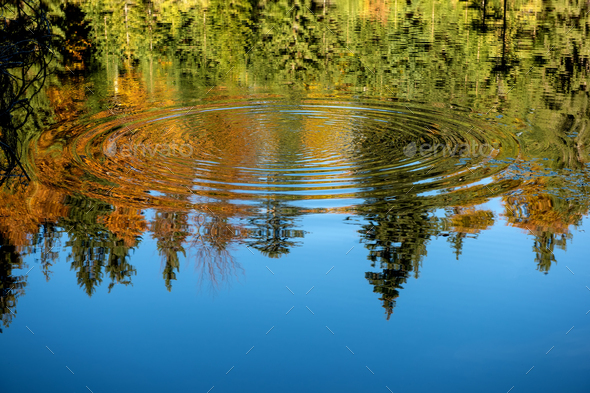 Reflection of the autumn forest in the mirror of the lake - Stock Photo - Images