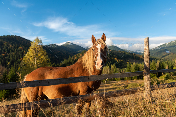 Brown horse in a meadow in mountain valley - Stock Photo - Images