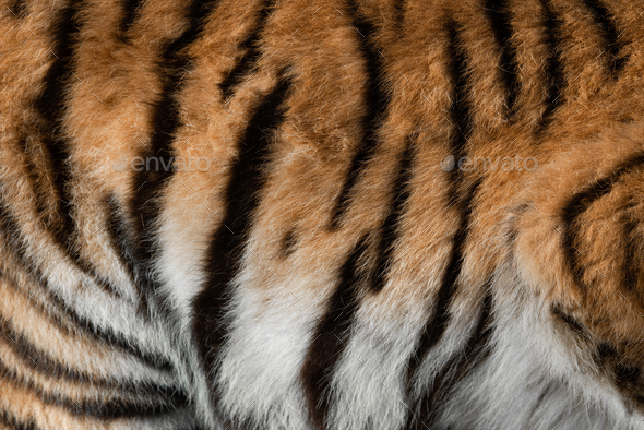 Real skin texture of Tiger - Stock Photo - Images
