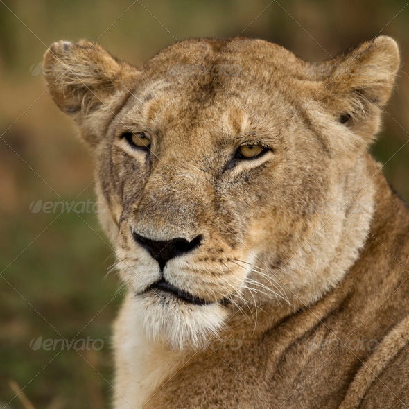 Close-up of Serengeti National Park, Serengeti, Tanzania, Africa - Stock Photo - Images