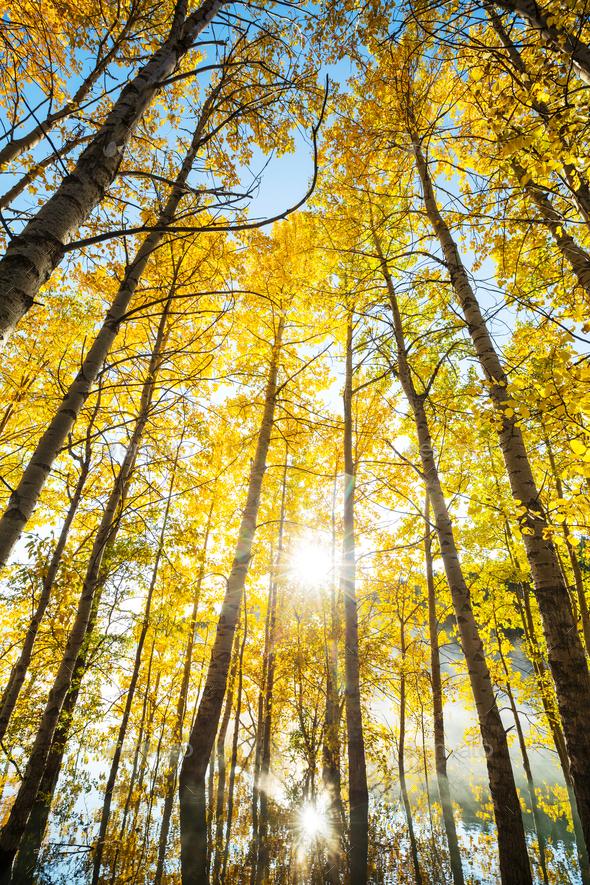 Autumn lake - Stock Photo - Images