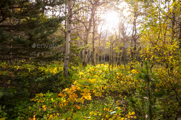Autumn forest - Stock Photo - Images