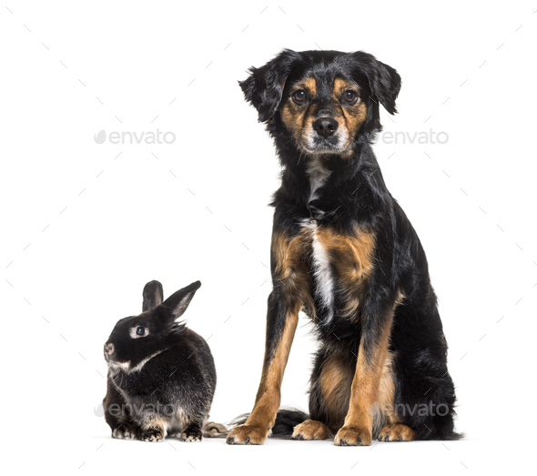 Mixed-breed dog and a rabbit sitting against white background - Stock Photo - Images
