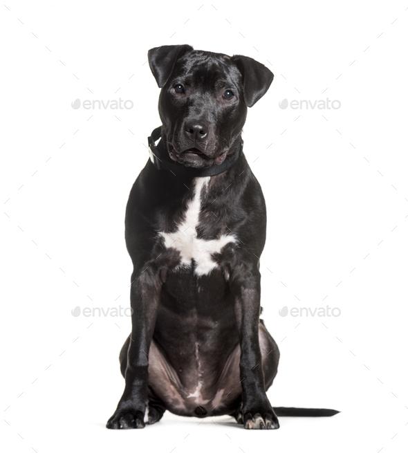 Mixed-breed dog sitting against white background - Stock Photo - Images