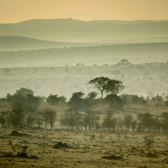 Africa landscape Serengeti National Park, Serengeti, Tanzania - Stock Photo - Images