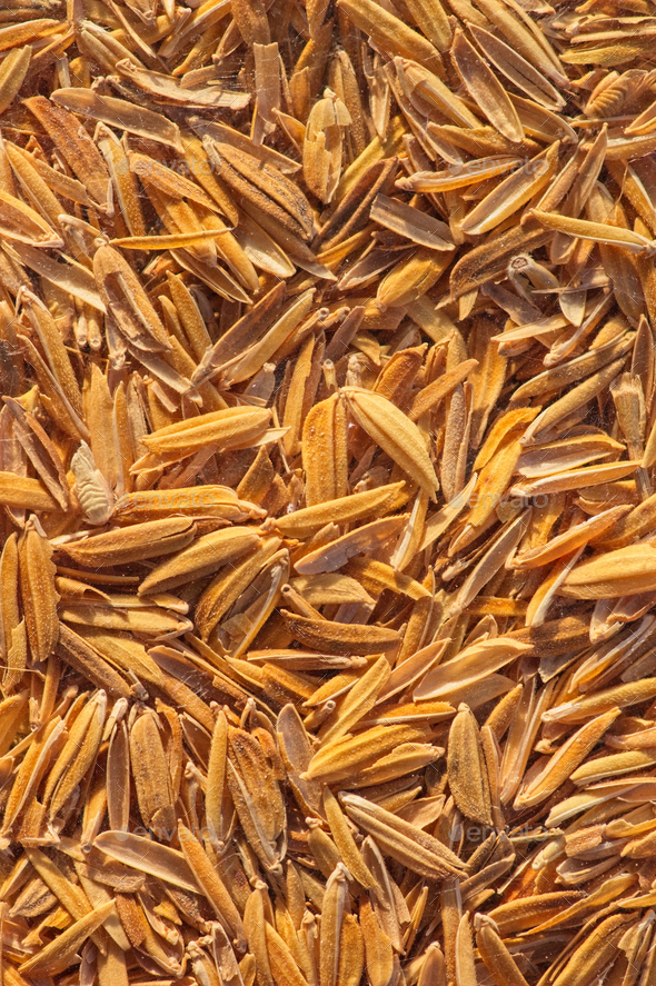 Golden background of the husk - Stock Photo - Images
