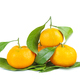 Mandarines, tangerine or clementine with leaves isolated on white background - PhotoDune Item for Sale