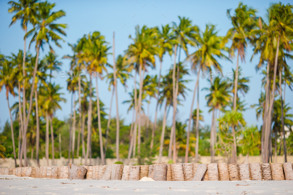 Palm trees on white sandy beach - Stock Photo - Images