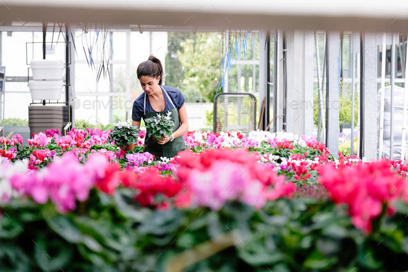 People Working in Flower Shop - Stock Photo - Images