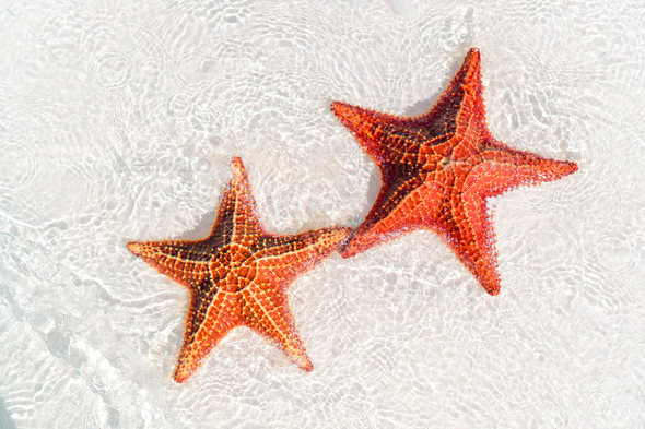 Tropical white sand with red starfish in clear water - Stock Photo - Images