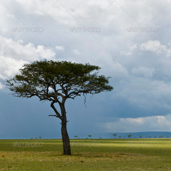 Africa landscape, Serengeti National Park, Serengeti, Tanzania - Stock Photo - Images