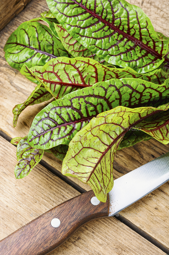 Raw sorrel leaves - Stock Photo - Images
