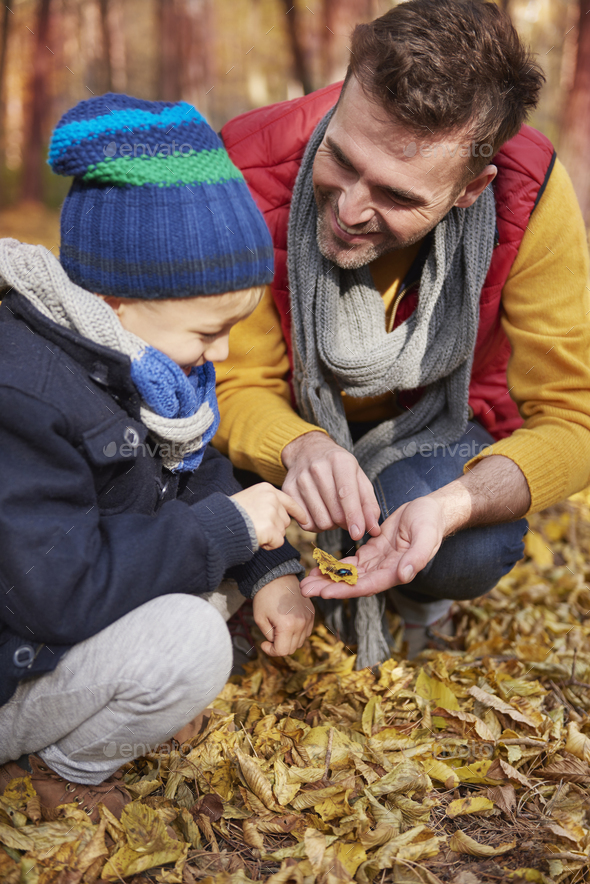 Teaching how looks animal life in the forest - Stock Photo - Images