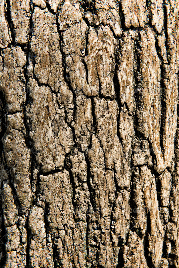 Close-up of tree bark - Stock Photo - Images