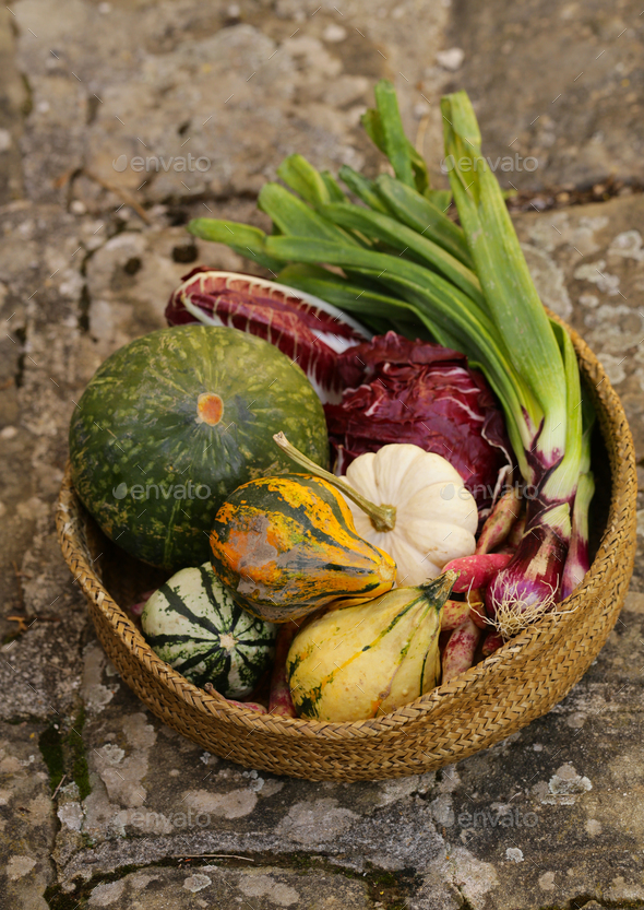 Autumn Vegetables Harvest - Stock Photo - Images