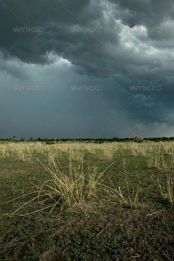 Rain cloud over Africa landscape, Serengeti National Park, Serengeti, Tanzania - Stock Photo - Images