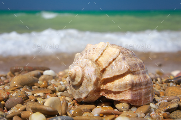 Cockleshell on the sea shore - Stock Photo - Images