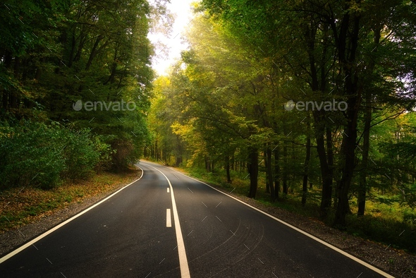 Asphalt road in the forest - Stock Photo - Images