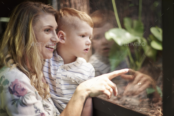 Mother showing interesting animals at the zoo - Stock Photo - Images