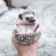Baby Hedgehog - PhotoDune Item for Sale