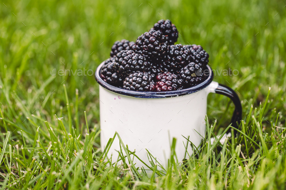 blue violet forest berries lie in a ceramic white cup on a green grass, food and vitamins - Stock Photo - Images