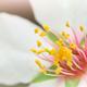 Macro of spring bud flower on tree branch. - PhotoDune Item for Sale