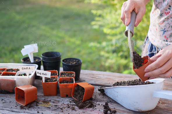 Women prepare to grow seedlings with small pots - Stock Photo - Images