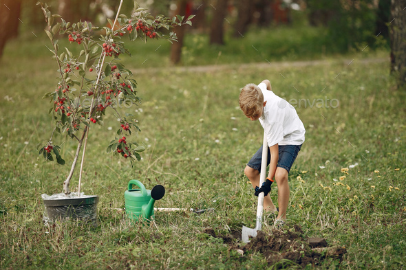 Cute little boy planting a tree on a park - Stock Photo - Images