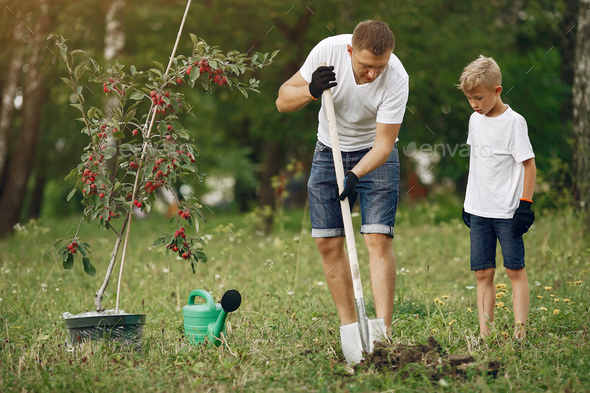 Father with little son are planting a tree on a yard - Stock Photo - Images