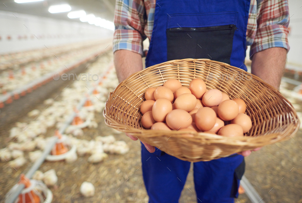 Eggs right from the farm - Stock Photo - Images