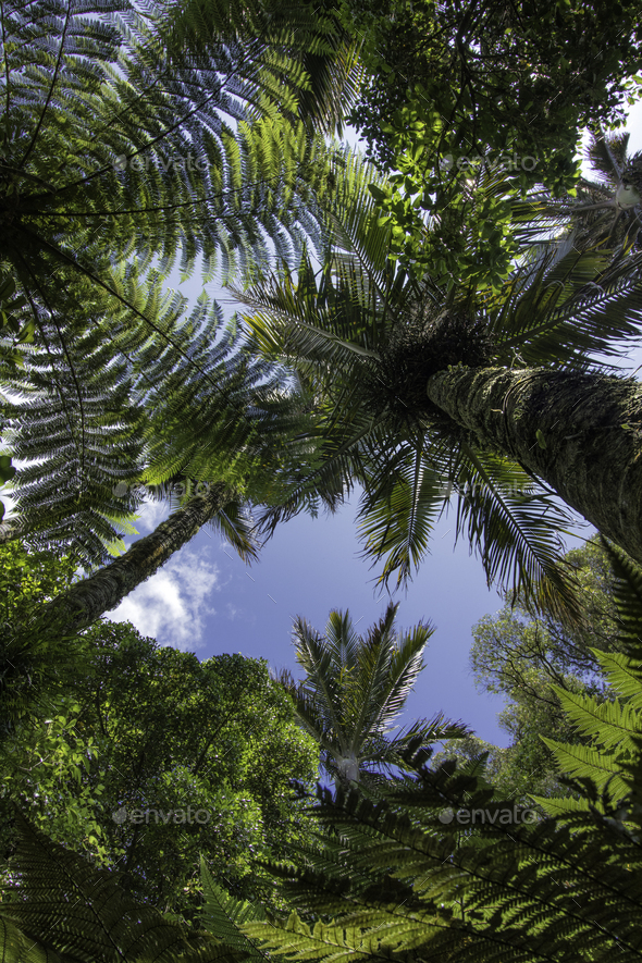 Tree canopy palm tree new zealand - Stock Photo - Images