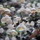 White small mushroom background macro - PhotoDune Item for Sale